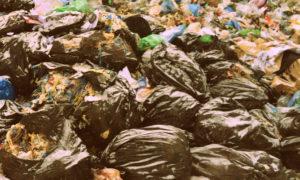 Вывоз мусора в Мытищах